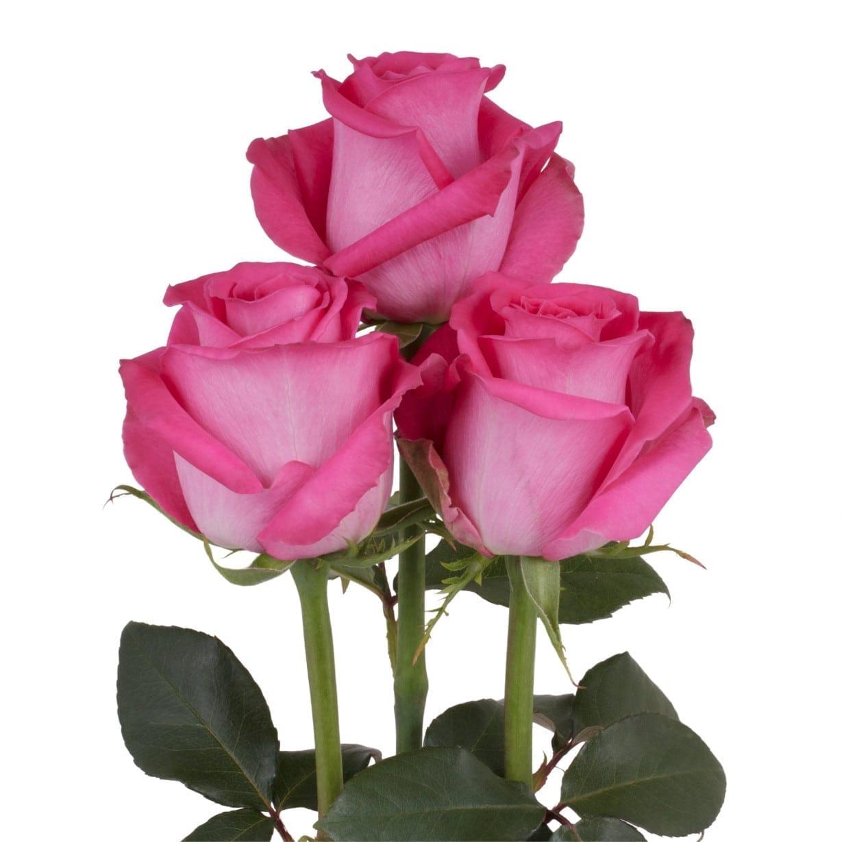 последний год роза топаз фото интерьер добавит фигурный